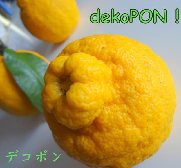 DSC09634-001